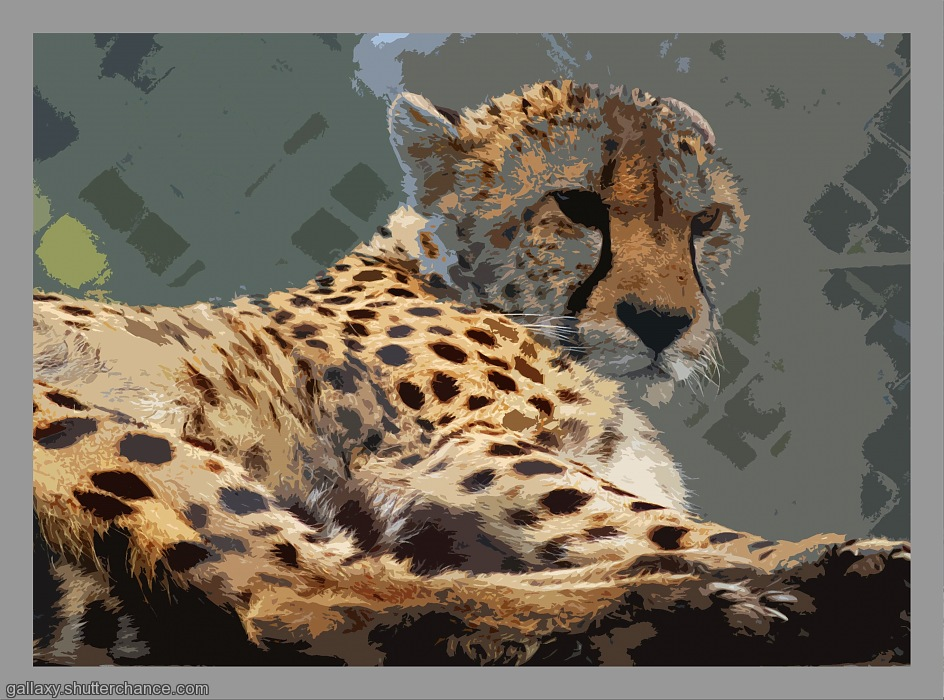 photoblog image Pllaying with the cheetah